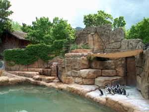 Zoo Penguin Habitat
