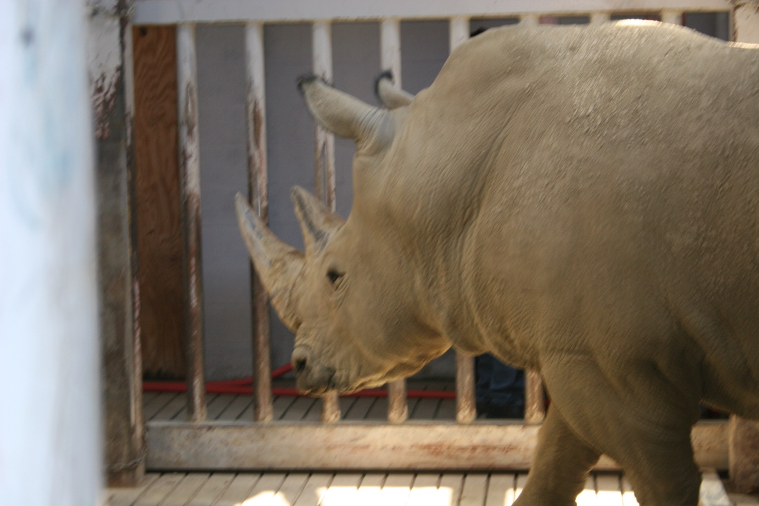 Keeping Animals And Zoo Keepers Safe