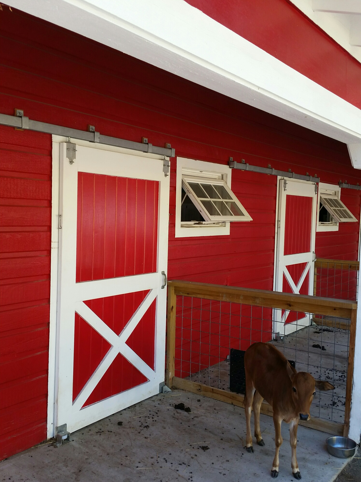 Veterinary Clinics Keep Large Animals Safe by Using Sliding and Outward Swinging Doors