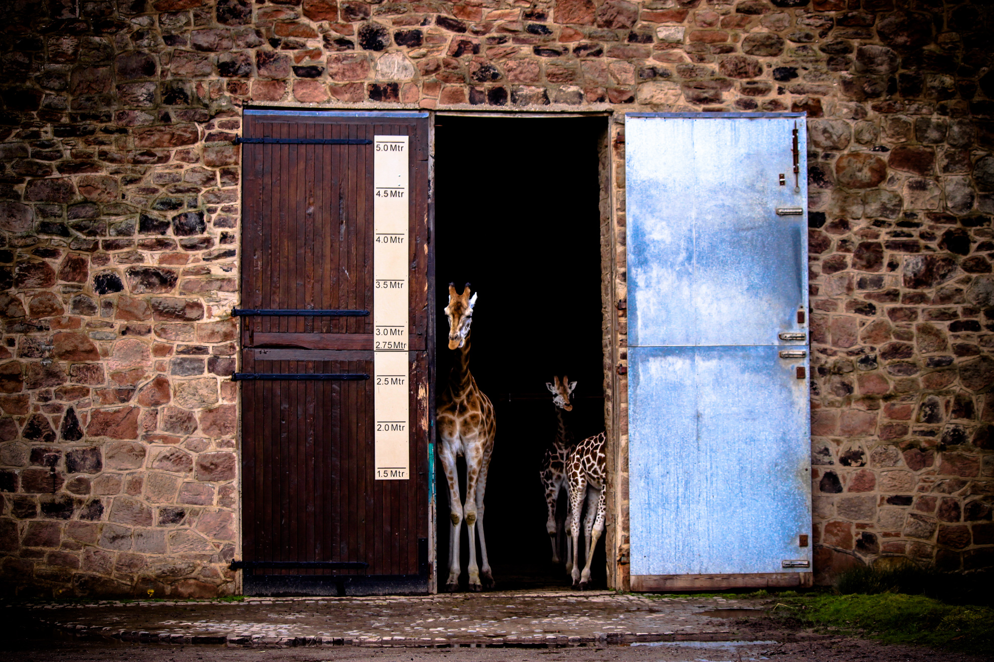Zoo Gates